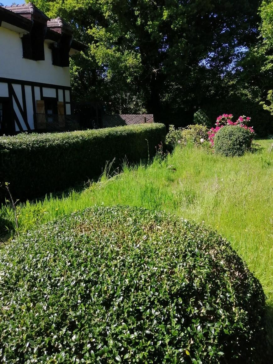 arbres et haies le bon équilibre au jardin